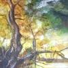 vieil_arbre_3_acrylique_sur_papier_se_soie_11x14