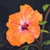 Fleur d'hibiscus huile