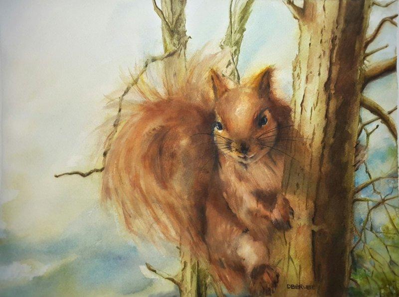 L\'écureuil roux