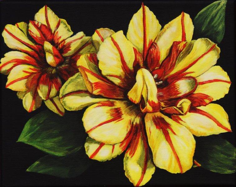 Tulipes Monsella 2