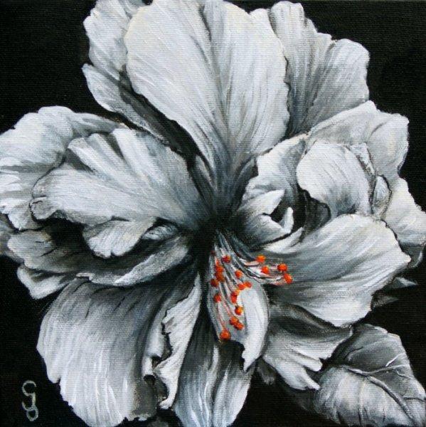 Fleur d\'hibiscus