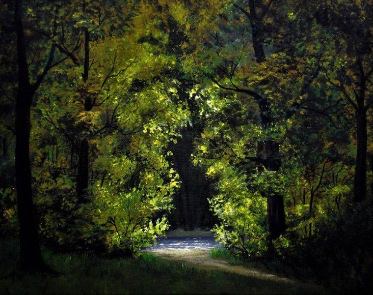Forêt de nuit
