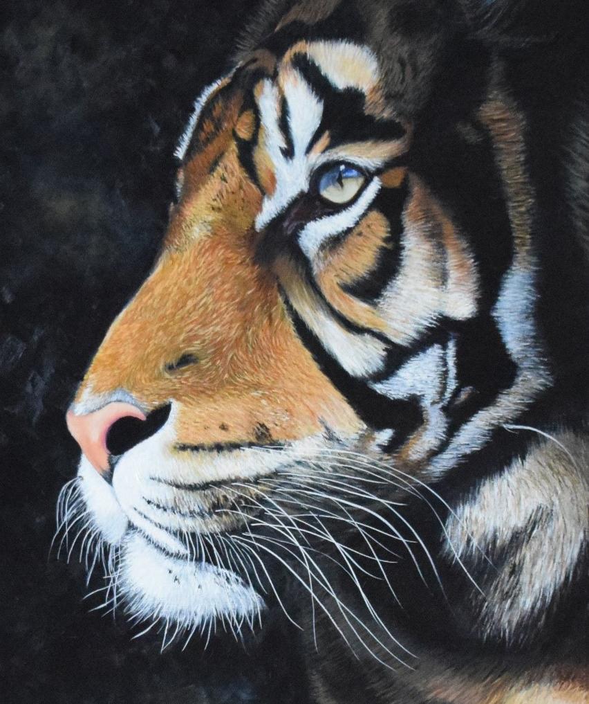 tigre-thumb