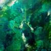 foret_damazonie_-20pox16po_oct2012