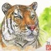 2010 - Canh Dân - Année du Tigre de terre